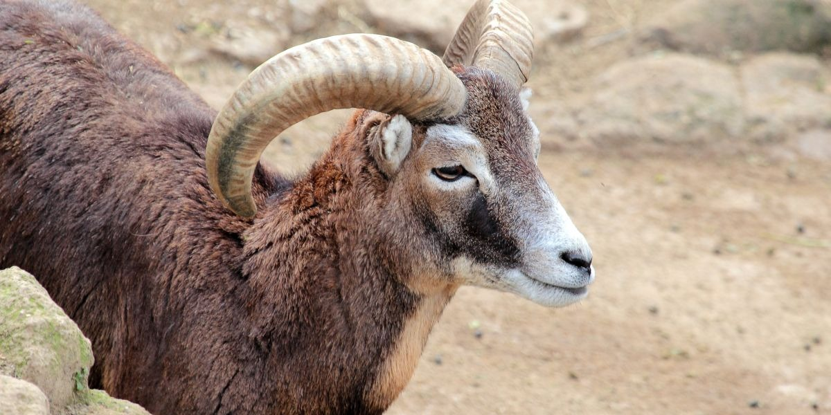 Aries Sign: Characteristics, Personality + Traits of the Star Sign