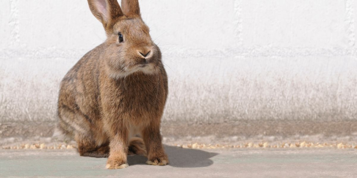 Rabbit: Characteristics of the Chinese Zodiac Sign in Astrology